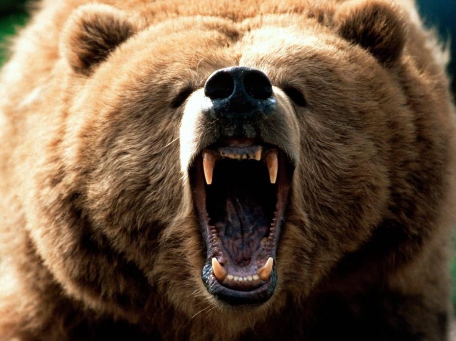 un-ours-grognon